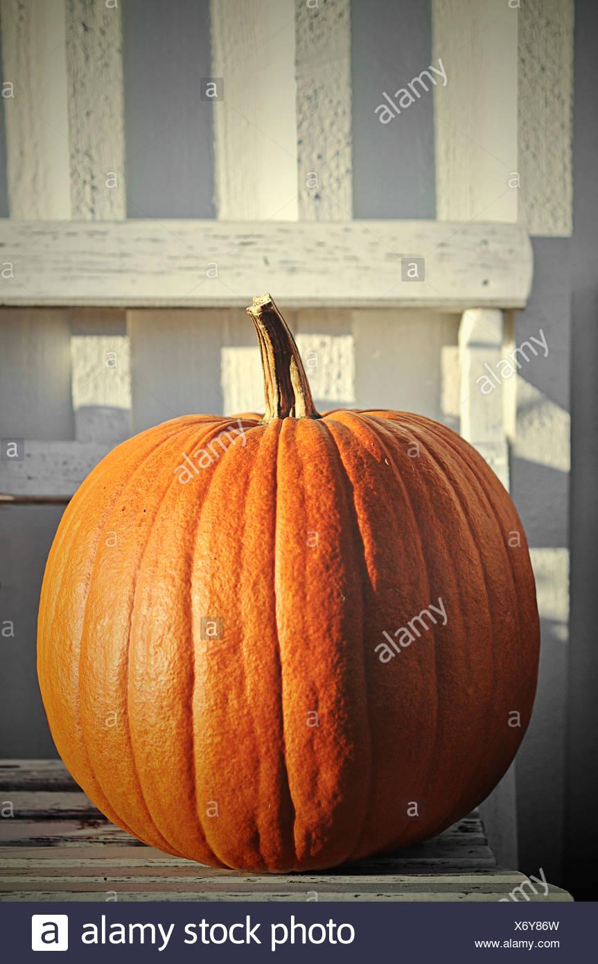 Huge pumpkin on garden bench - Stock Image