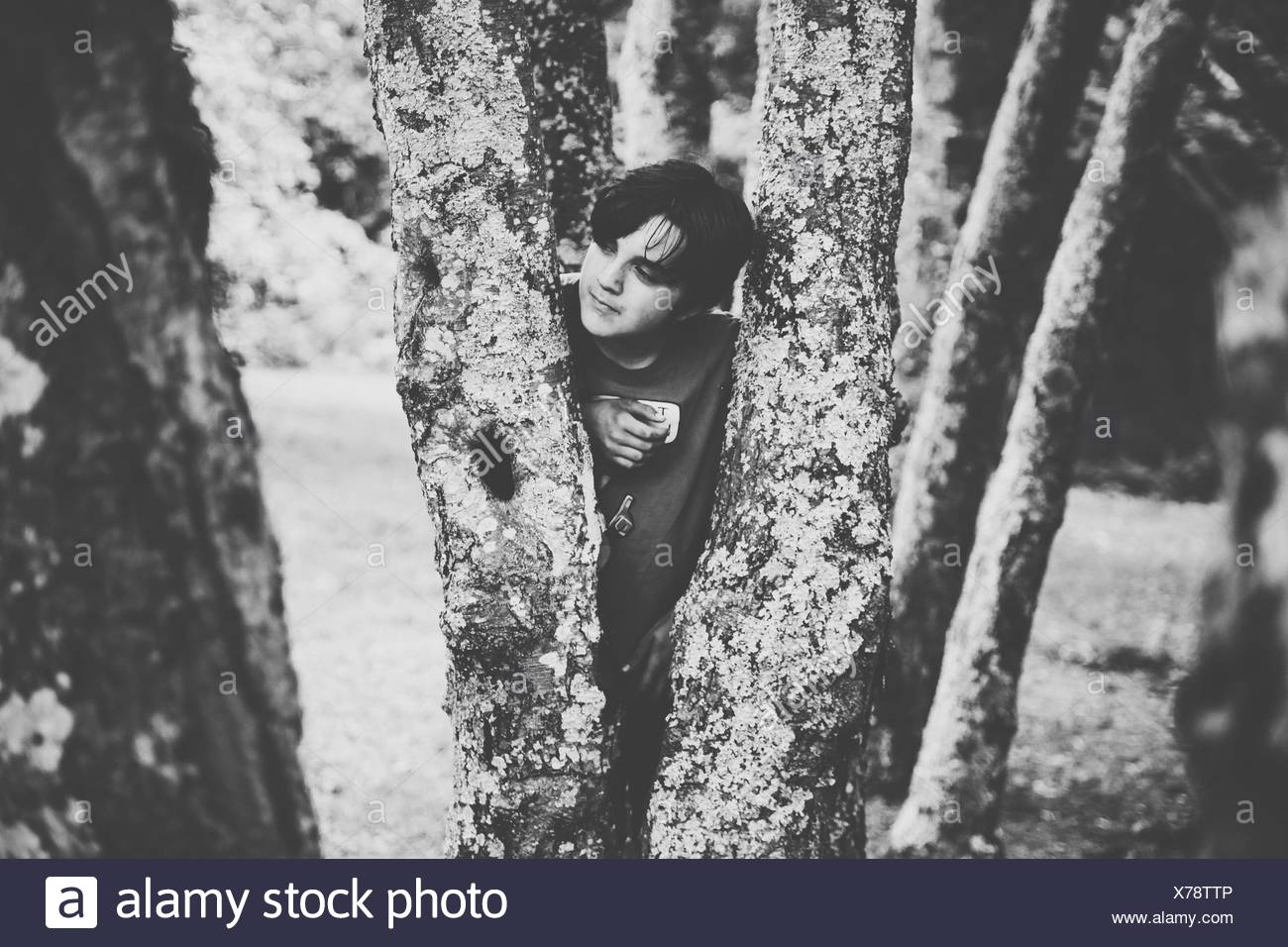 Young Man Standing Behind Tree Trunks In Park - Stock Image
