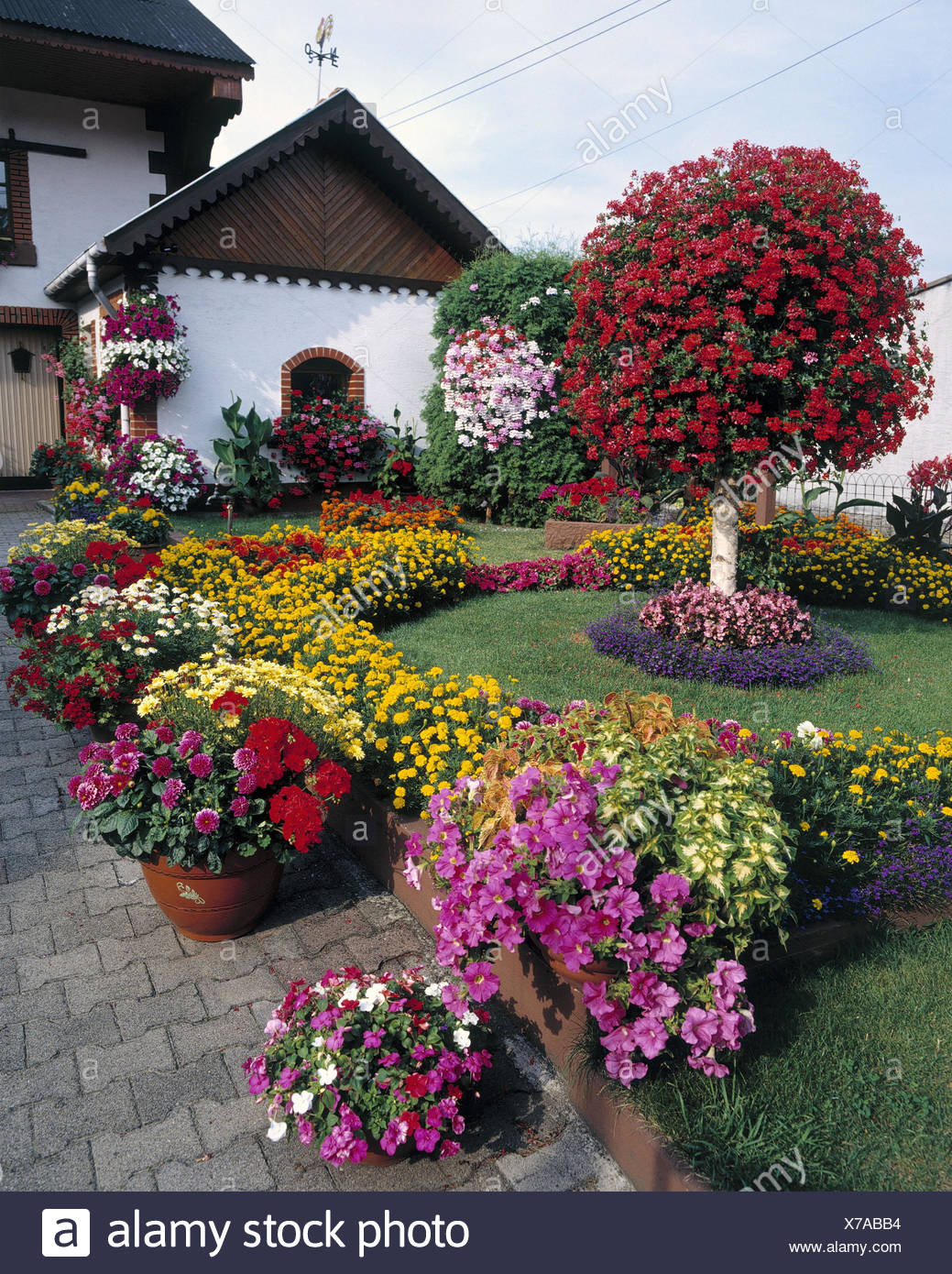 france alsace residential house garden floral decoration europe la france rpublique franaise alsace alsace front garden nature flowers garden - House Garden Decoration