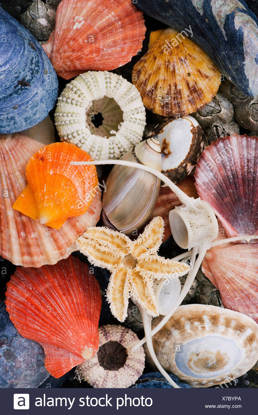 Colorful shells on the Glacier Bay shore. - Stock Image