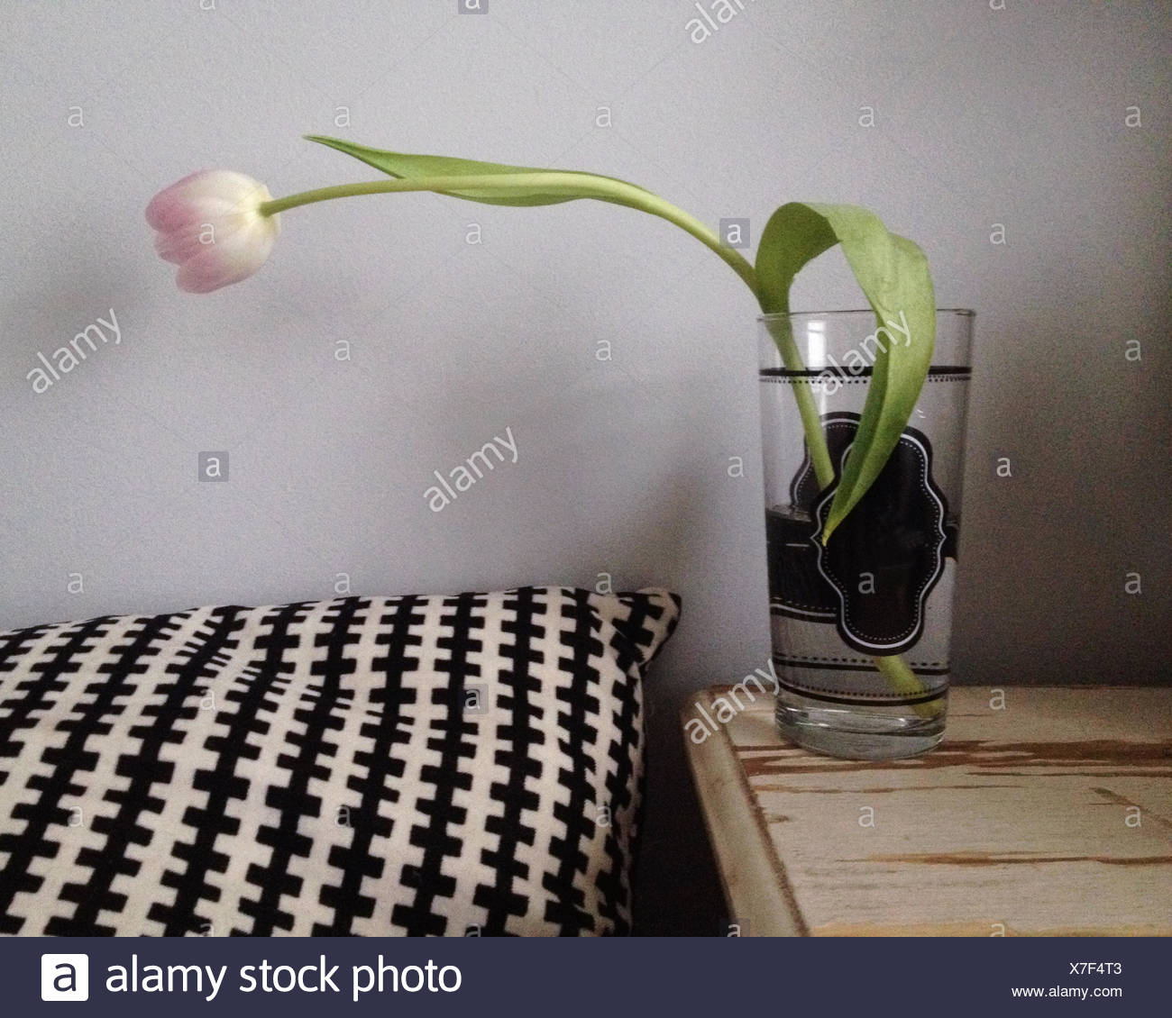 Tulip in glass of water - Stock Image