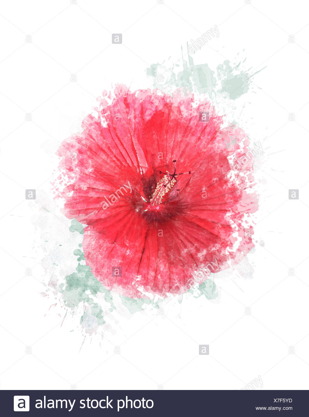 Watercolor Image Of Hibiscus Flower Stock Photo 280002449 Alamy