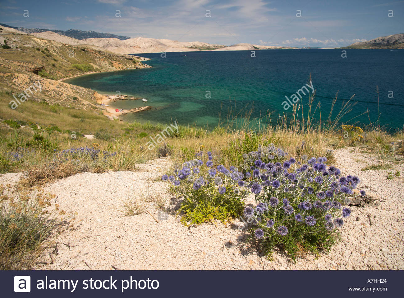 View of the pag island landscape croatia in this point there was a view of the pag island landscape croatia in this point there was a beautiful view of the sea and the flowers behind the beach izmirmasajfo
