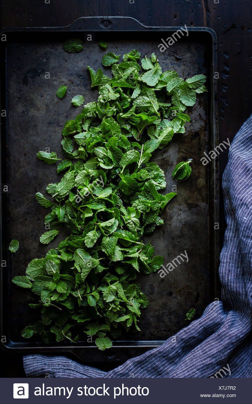 Mint on a cooking tray - Stock Image