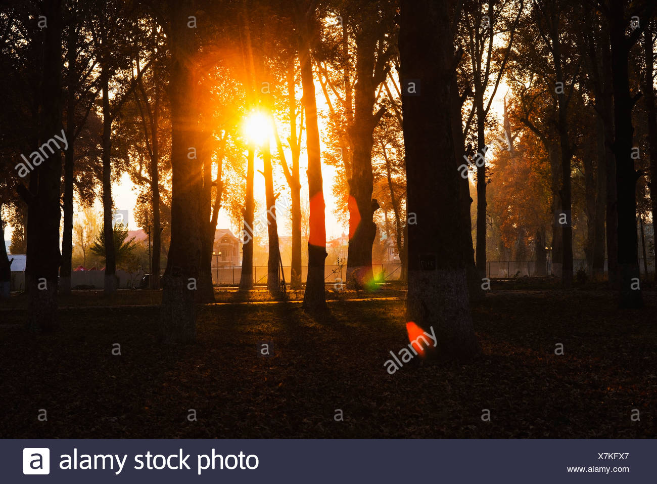 Trees In A Garden At Sunset, Naseem Bagh, Srinagar, Jammu And Kashmir, India