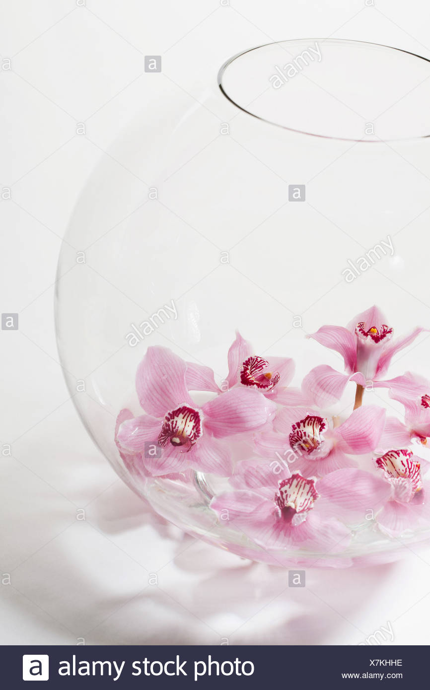 Pink flowers in glass bowl - Stock Image