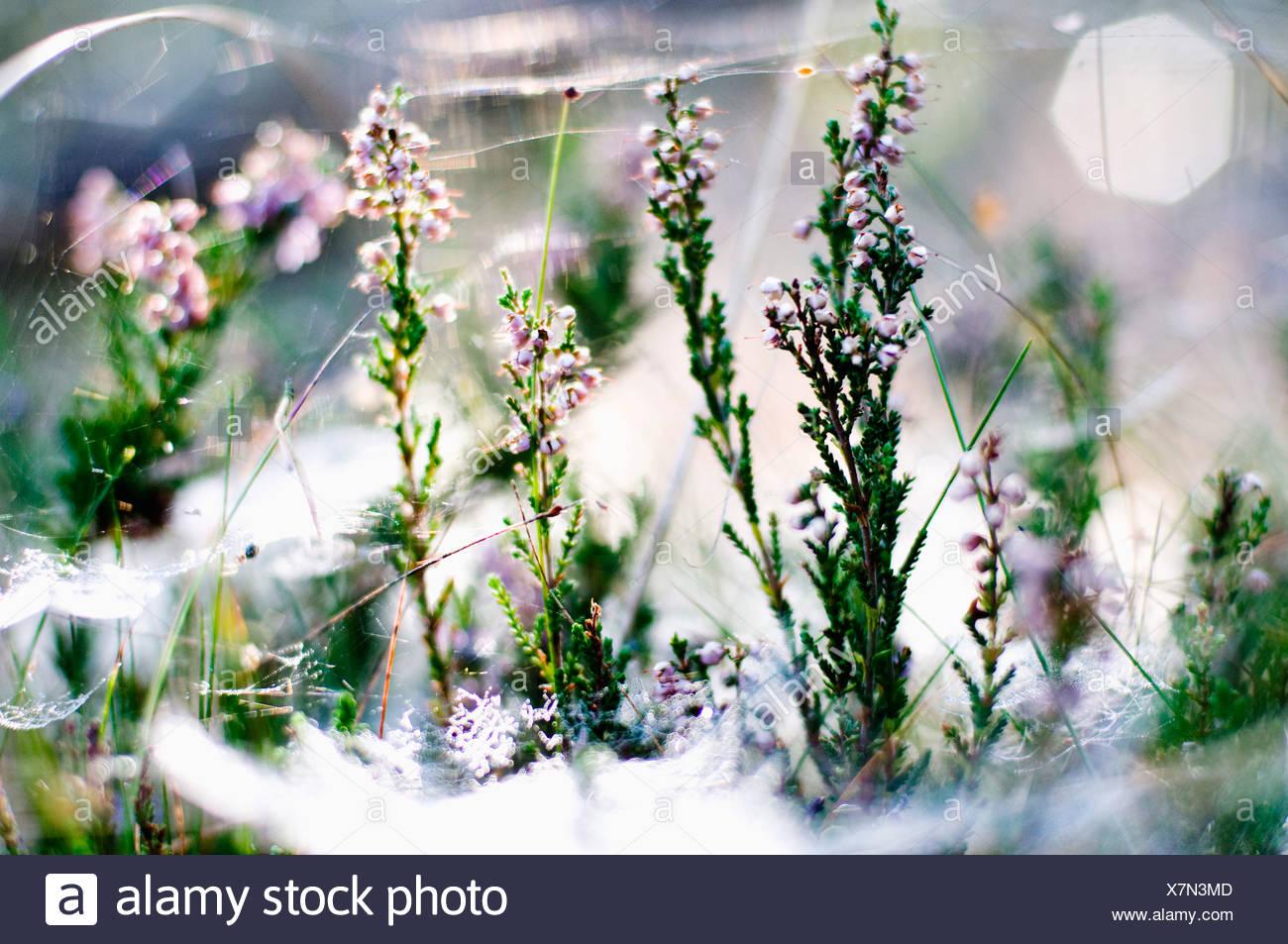 Dream plant - Stock Image