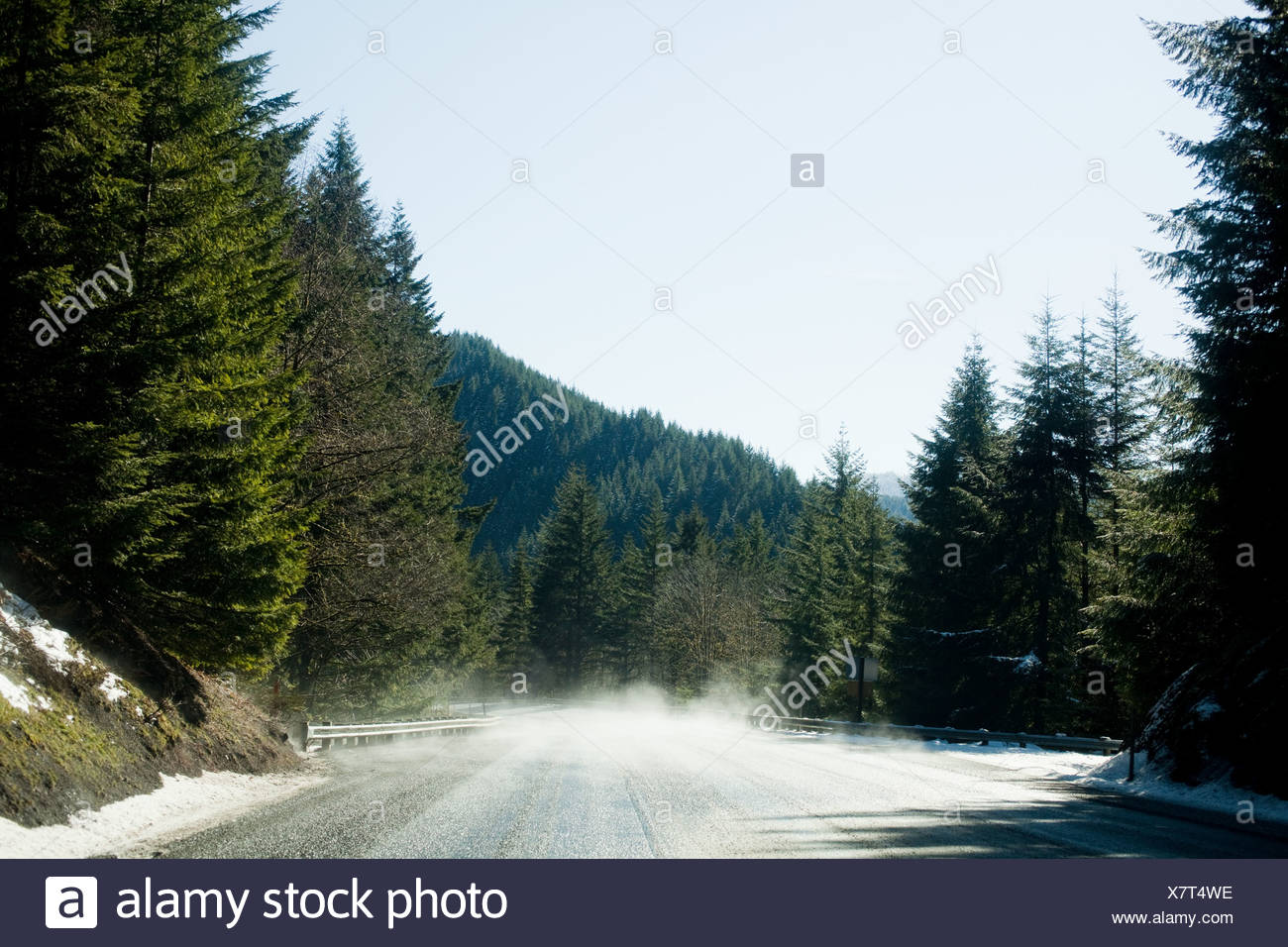 Empty forest road - Stock Image