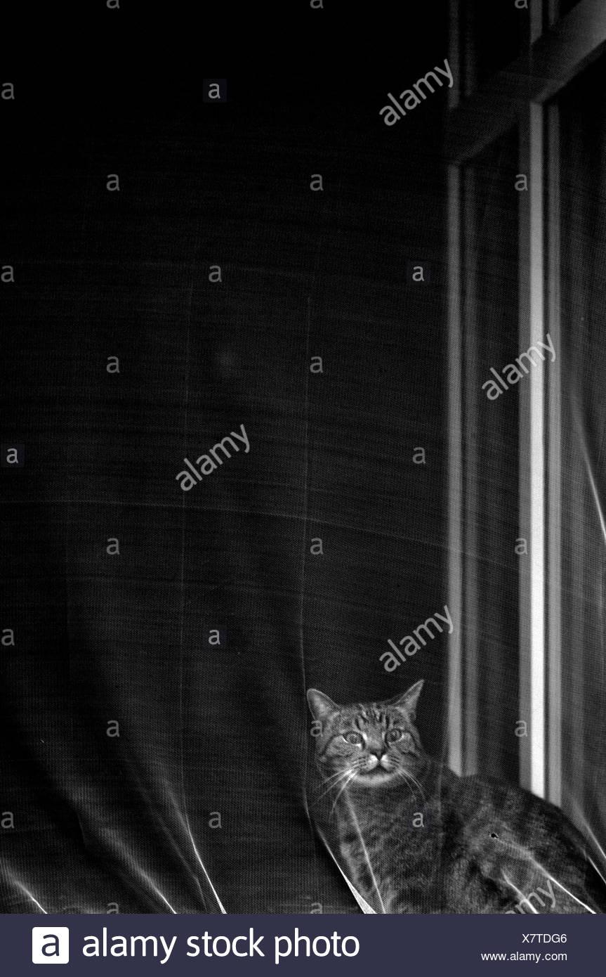 cat,imprisoned - Stock Image