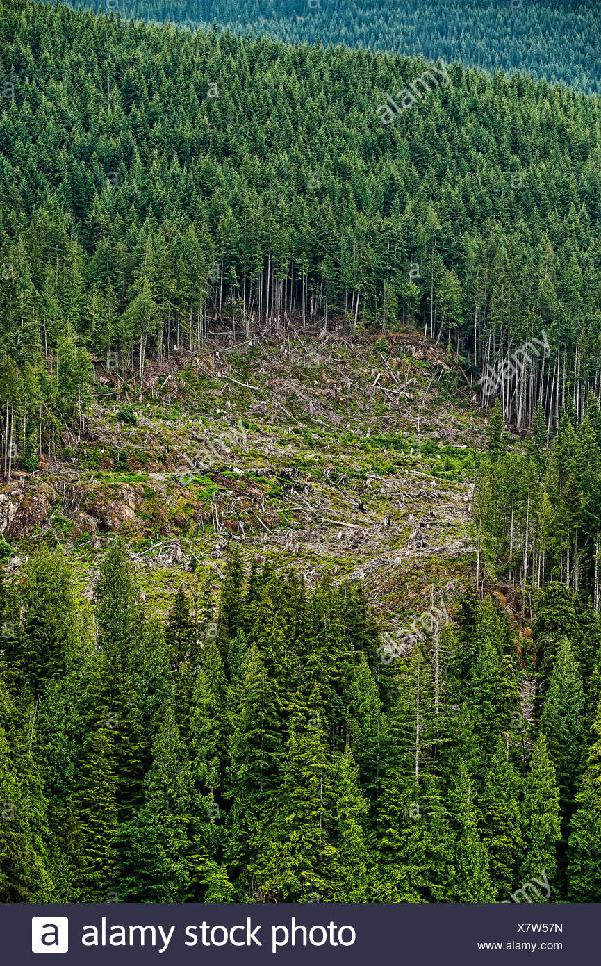 Clearcutting along the Campell River, British Colombia, Canada - Stock Image