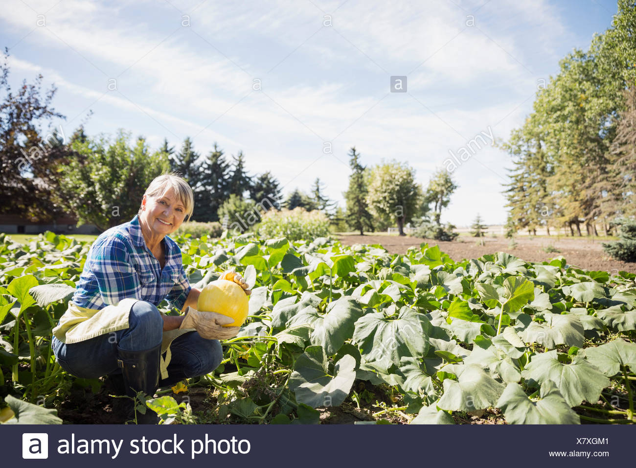 Portrait of woman harvesting squash in vegetable garden - Stock Image