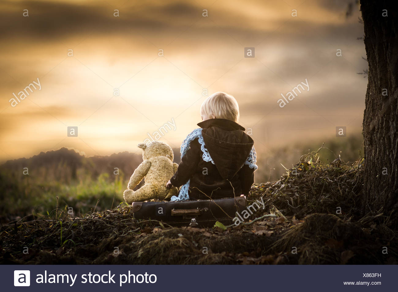 Poland, Rear view of boy sitting on tree roots with teddy bear - Stock Image