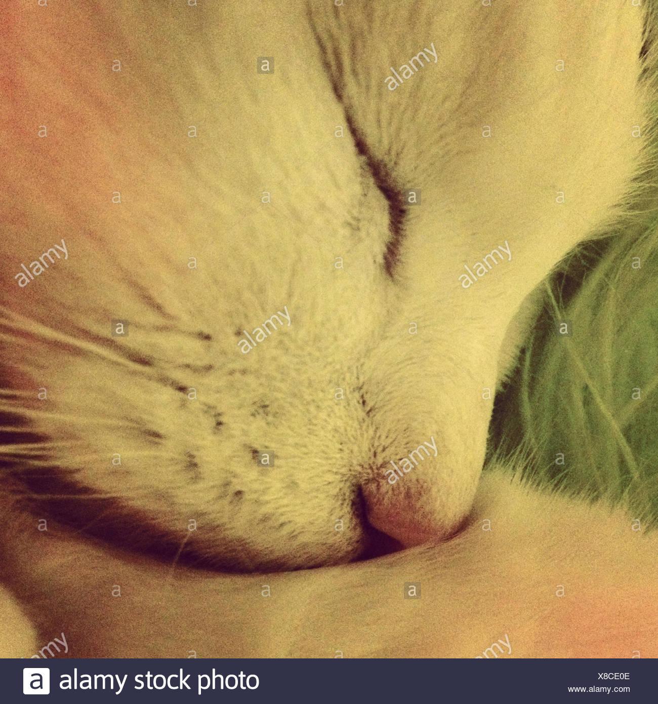 Close up of cat sleeping - Stock Image