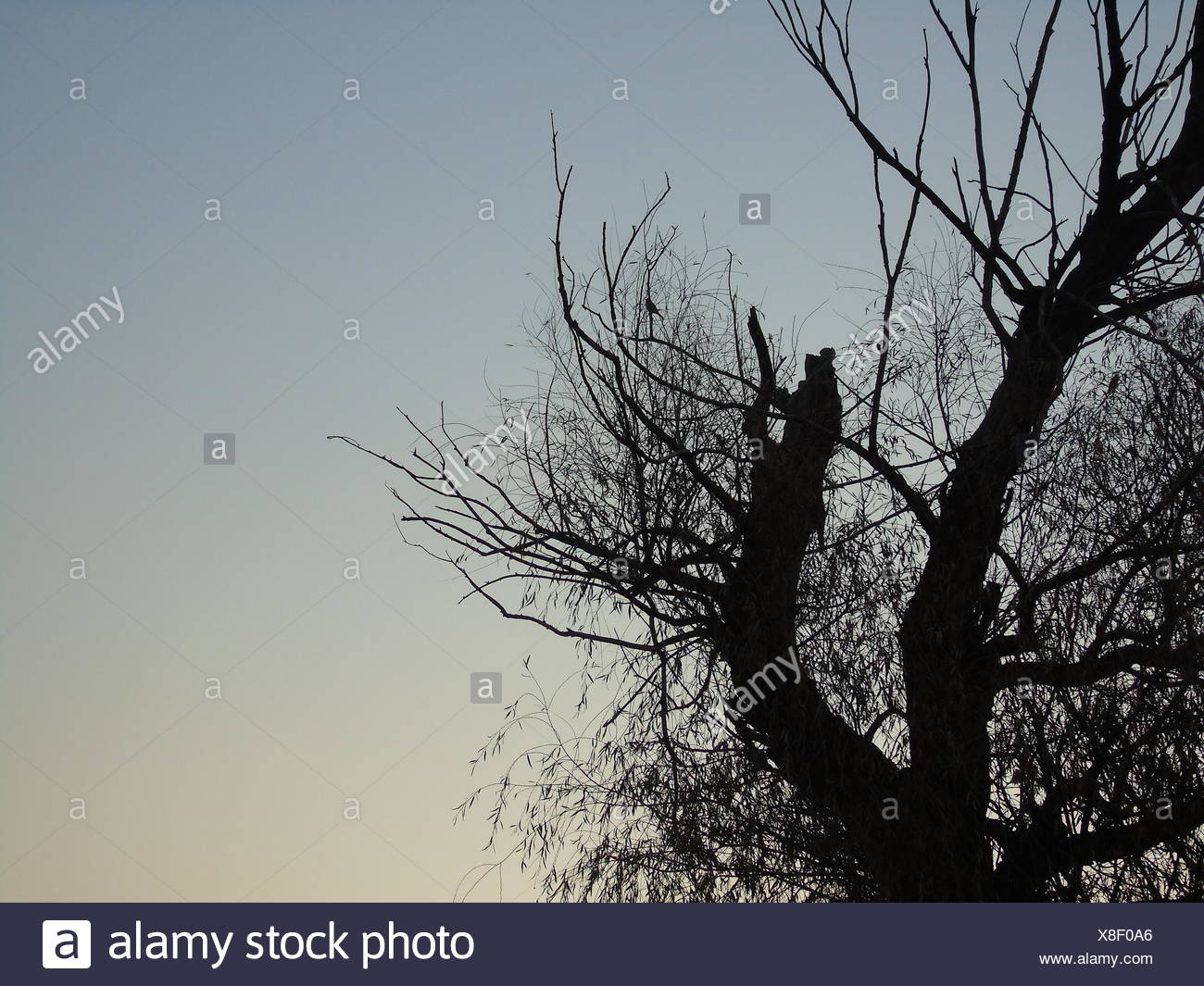 A poetic winter - Stock Image