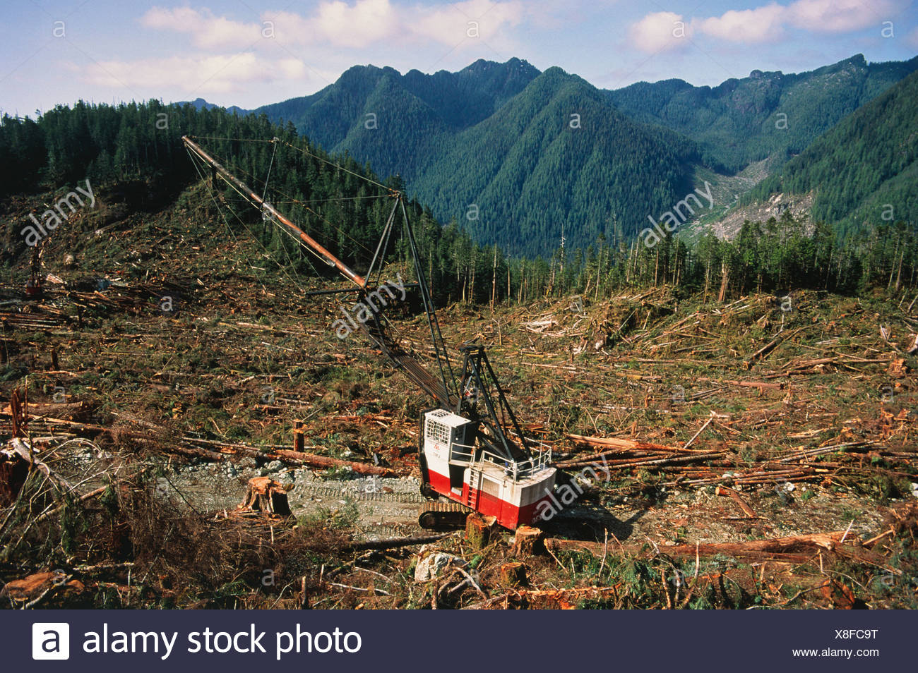 Deforestation of Temperate Rainforest - Stock Image