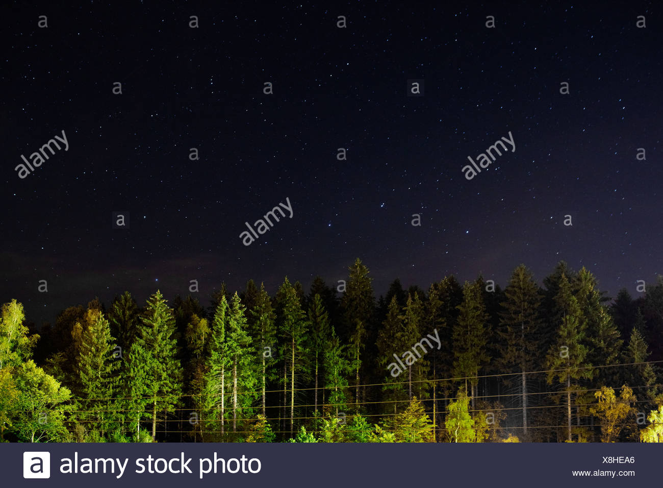 Trees and stars at night, Pobershau, Germany - Stock Image