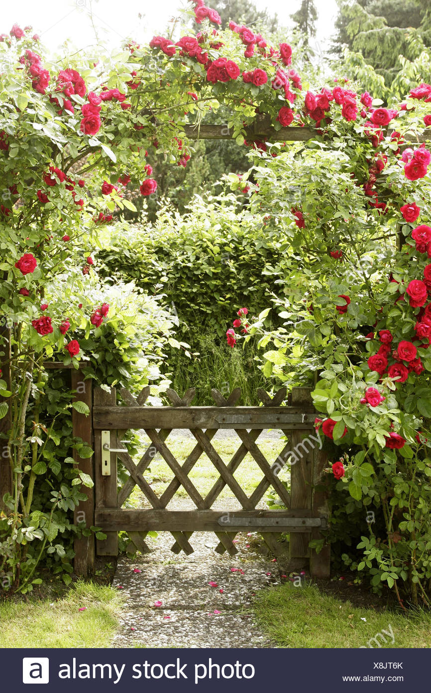 Love Garden Roses: Wooden Garden Arch Stock Photos & Wooden Garden Arch Stock