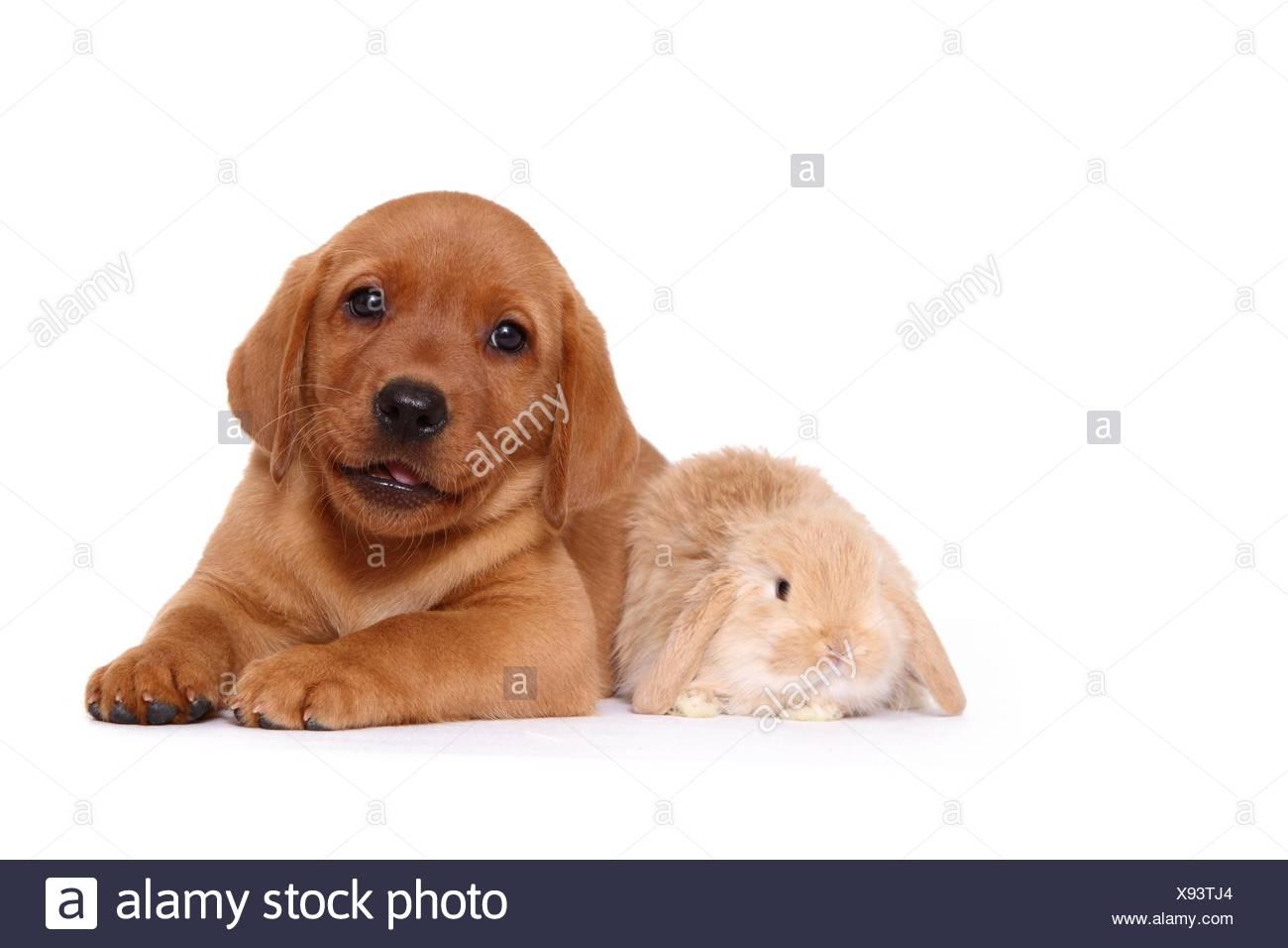 Rabbit Hunting Dog Training