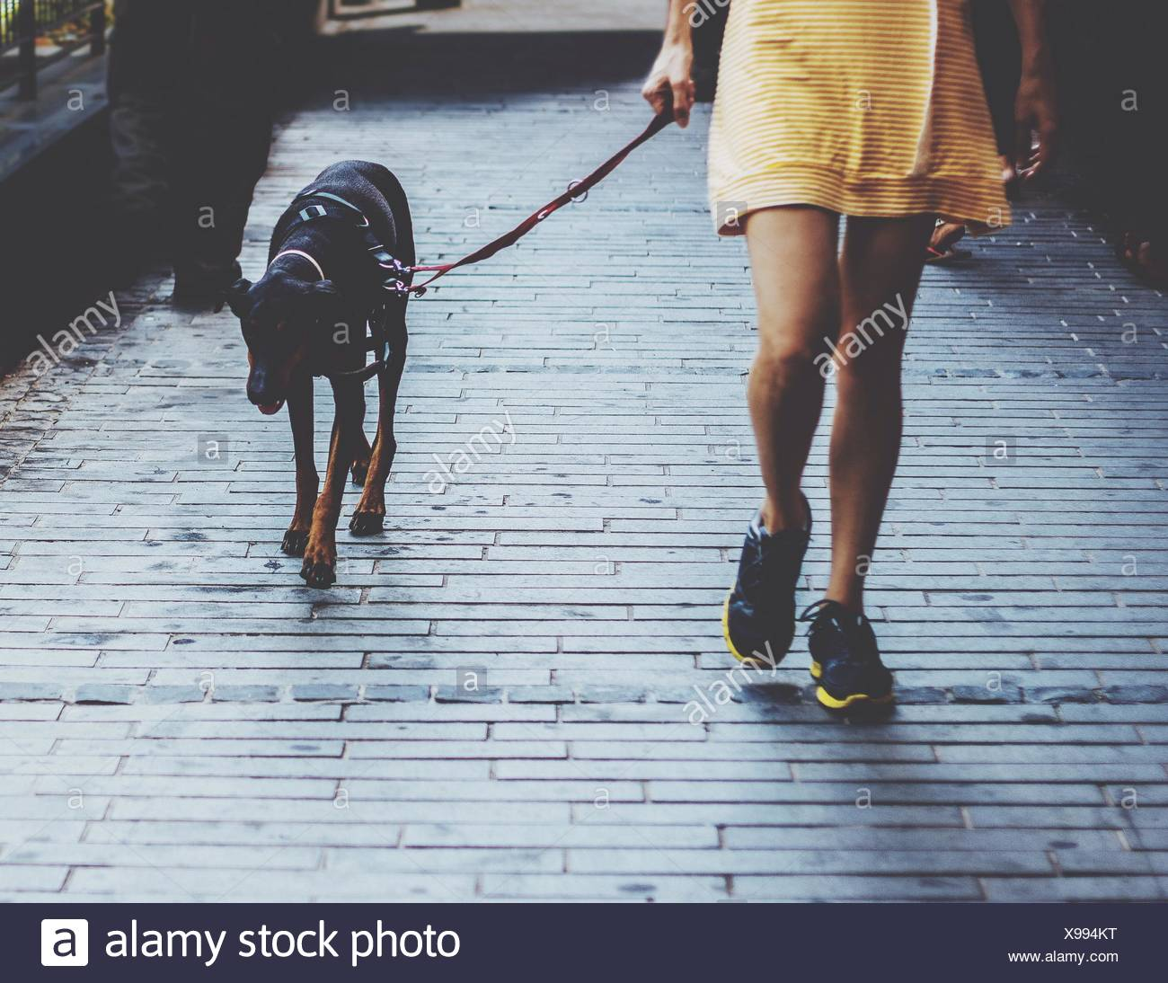 Woman Walking With Dog - Stock Image