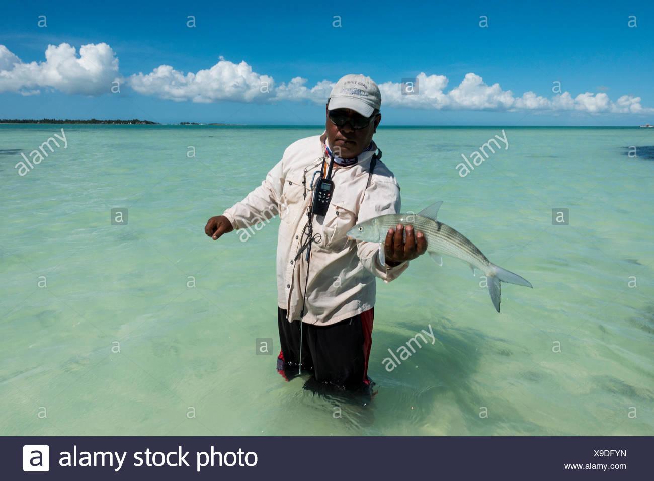 Bonefish Stock Photos & Bonefish Stock Images - Alamy