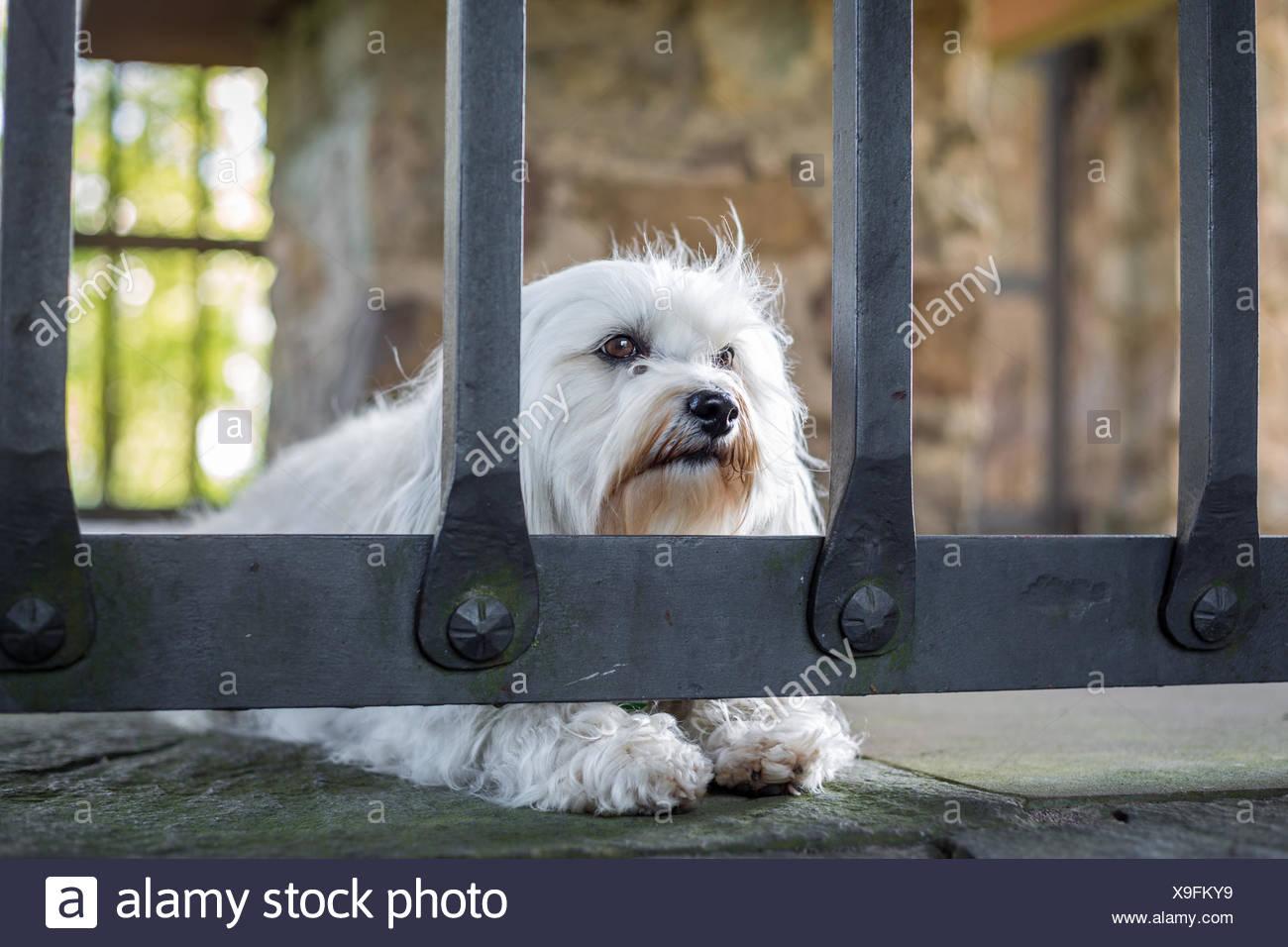 Imprisoned - Stock Image