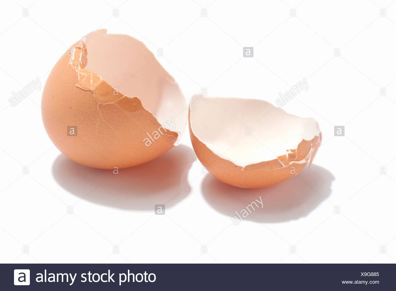 An empty chicken egg shell - Stock Image