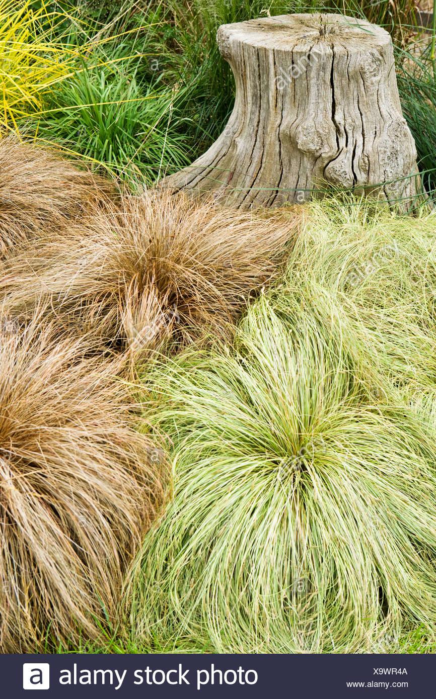 Beautiful Carex Bronze Reflection Pictures - Rellik.us - rellik.us