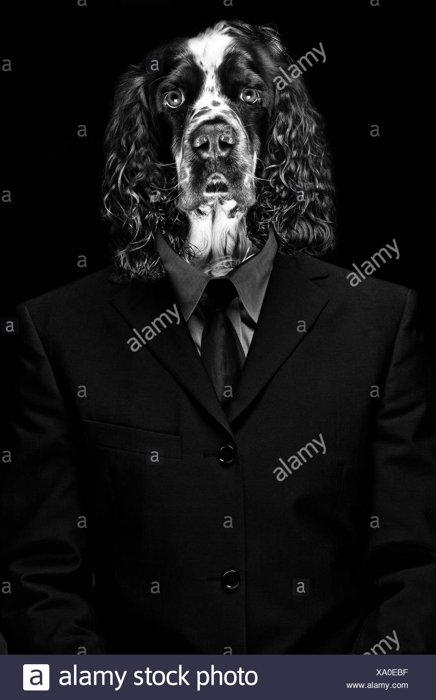 Mature man with dog face against black background - Stock Image