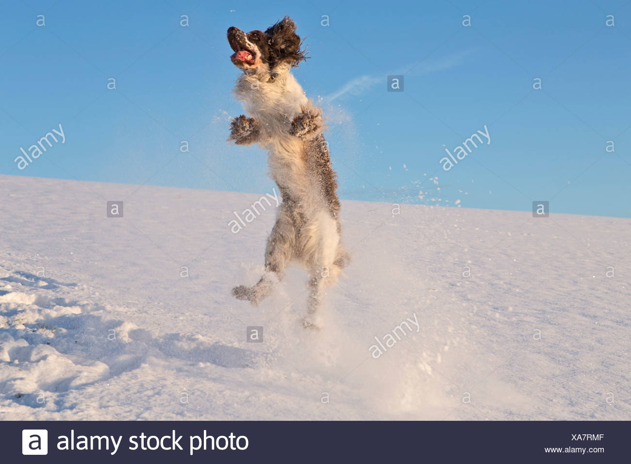 English Open Stock Photos & English Open Stock Images - Page 2 - Alamy