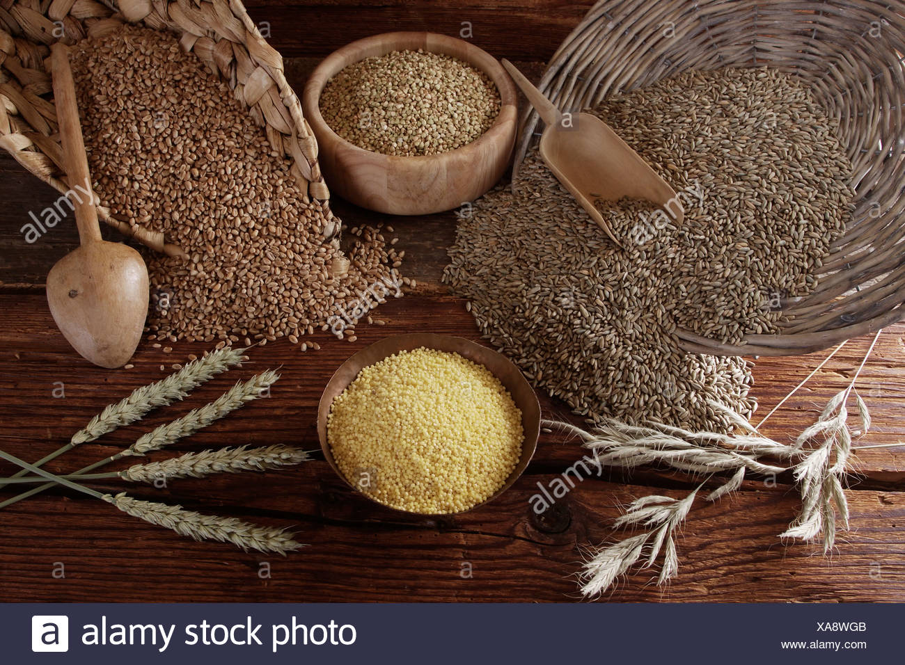 Different types of grain, Rye (Secale cereale), Wheat (Triticum), Buckwheat (Fagopyrum esculentum) and Millet (Panicum - Stock Image