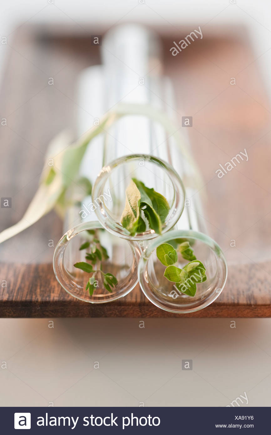 Natural plant remedy - Stock Image