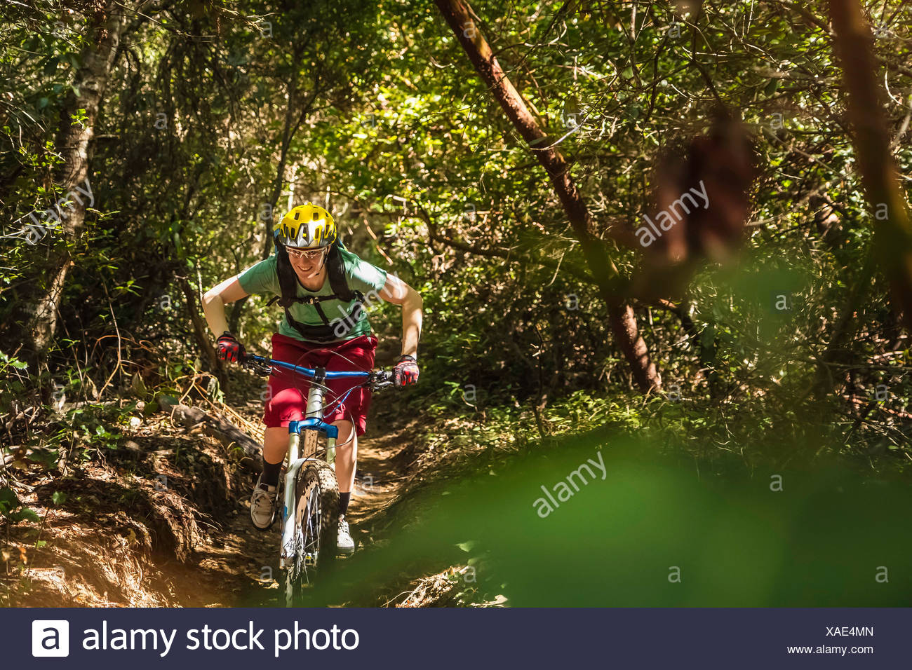Young woman mountain biking, Soquel Demonstration State Forest, Santa Cruz, California, USA - Stock Image