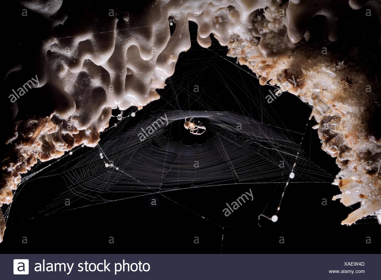 A spider on its web deep inside Cueva de Villa Luz in Tabasco, Mexico. - Stock Image
