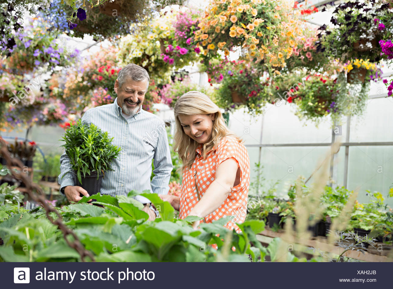 Couple shopping for plants in plant nursery greenhouse - Stock Image