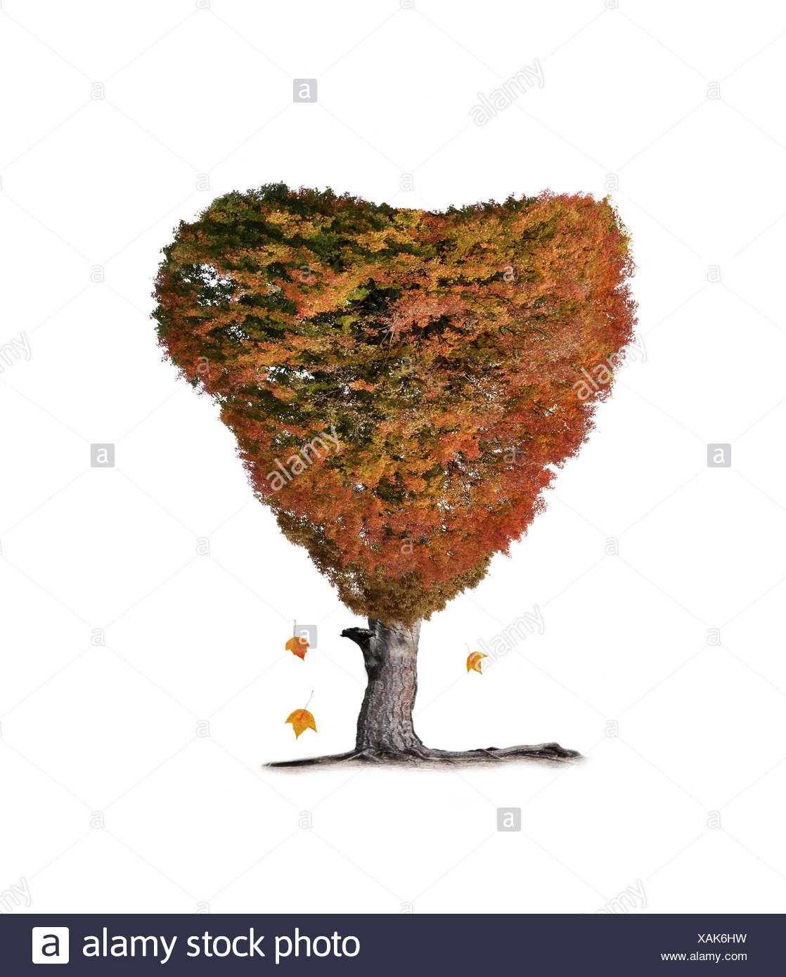 Colorful Fall Tree - Stock Image