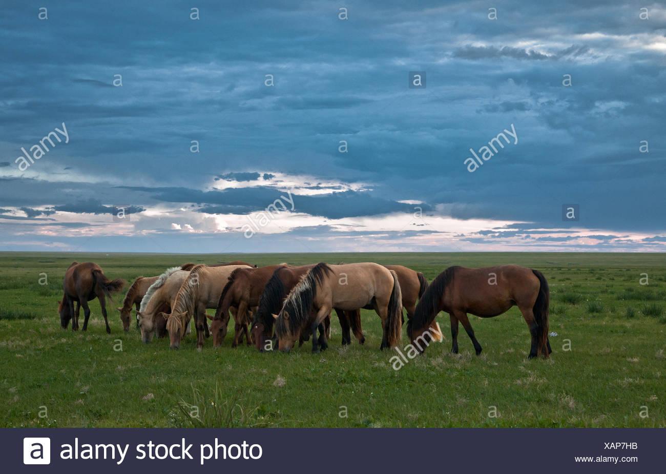 Dornod mongolia