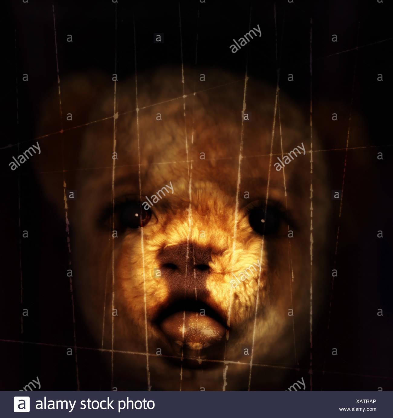 Teddybear - Stock Image