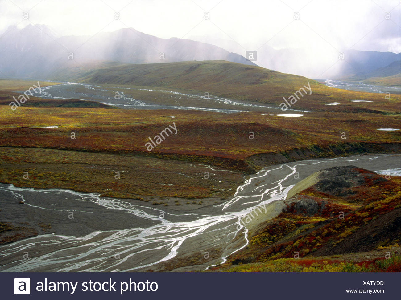 Alaska. Denali NP. Polychrome Pass. Braided Toklat River. - Stock Image
