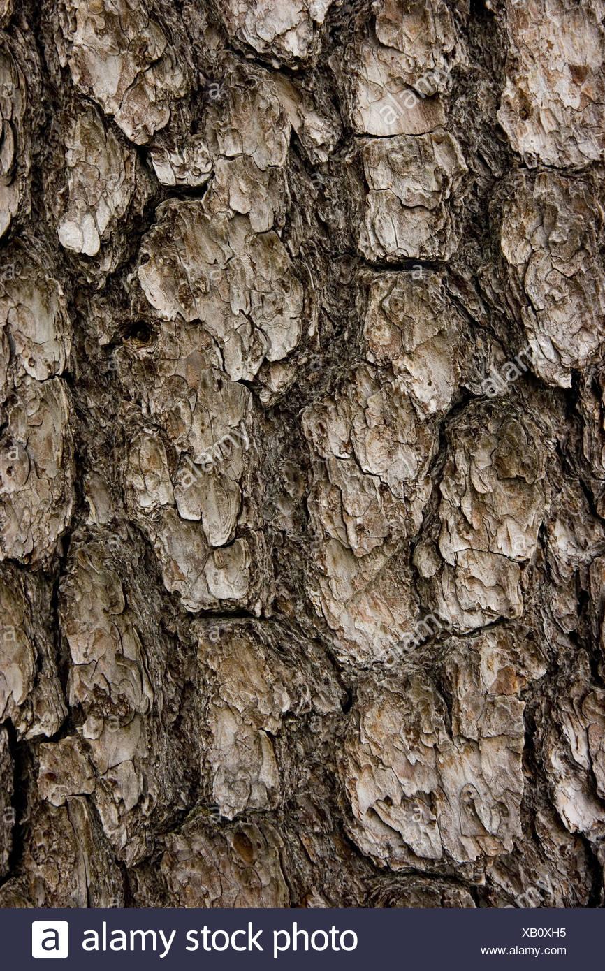 textural bark - Stock Image