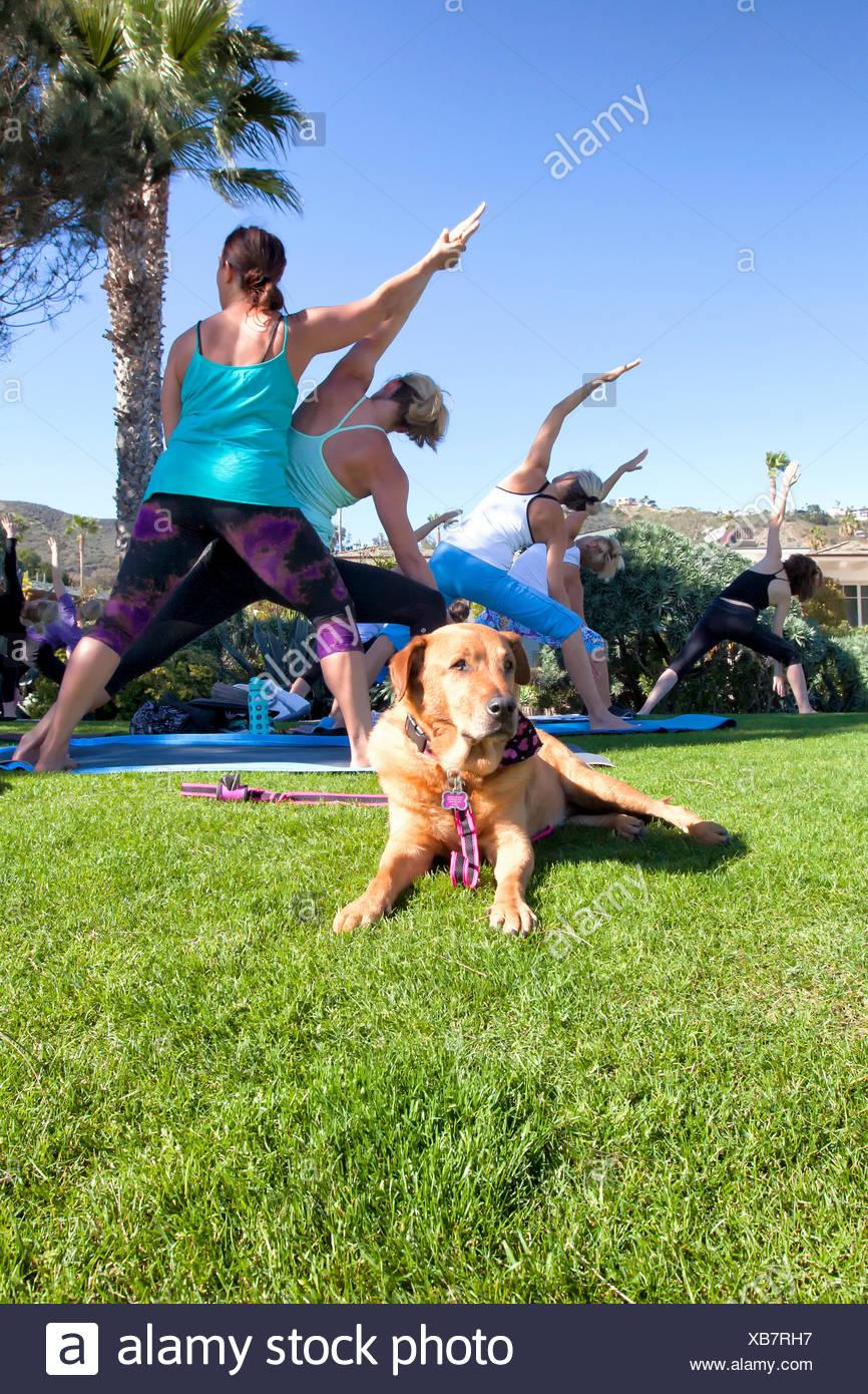 Yoga Class In Gardens Montage Stock Photos & Yoga Class In Gardens ...