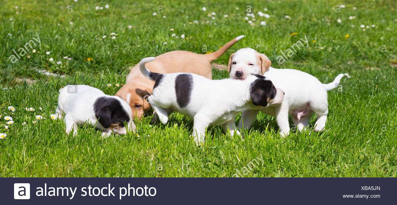 Mixed Breed Cute Little Puppies On Grass Stock Photo 282351069 Alamy