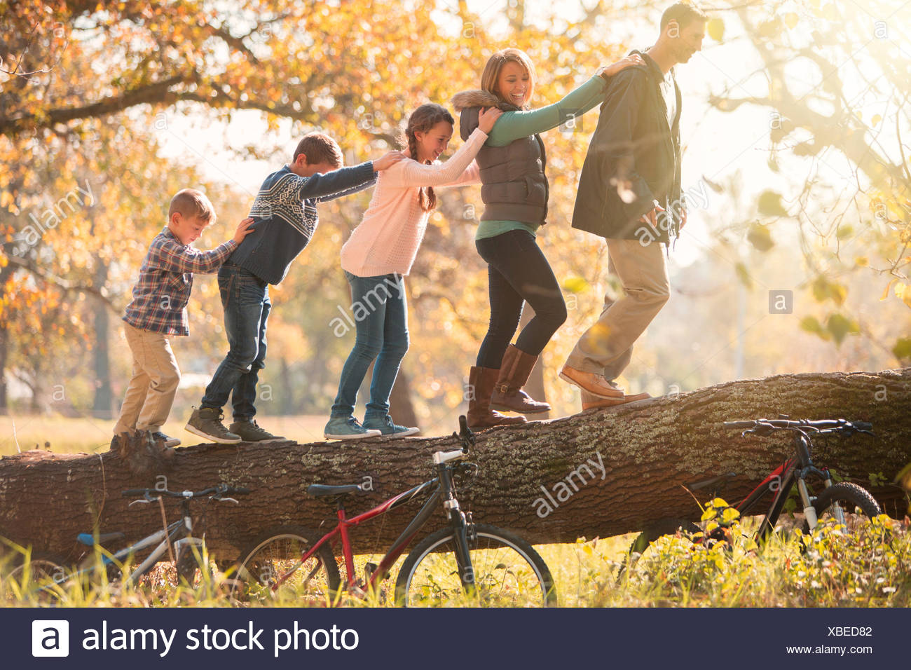 Family walking in a row on fallen log near bicycles - Stock Image