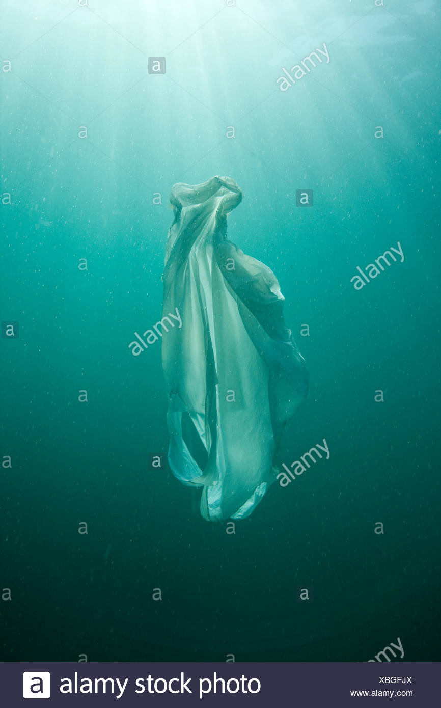 Plastic bag floating in the sea, resembling a jellyfish swimming, dangerous to sea turtles - Stock Image