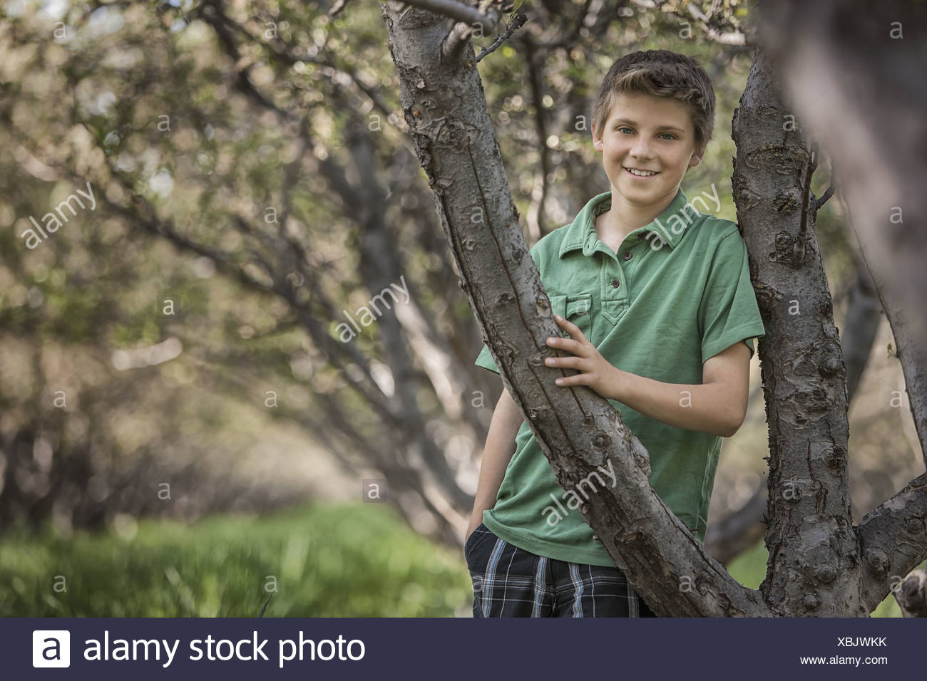Utah USA boy woodland tunnel tree branches meeting overhead - Stock Image