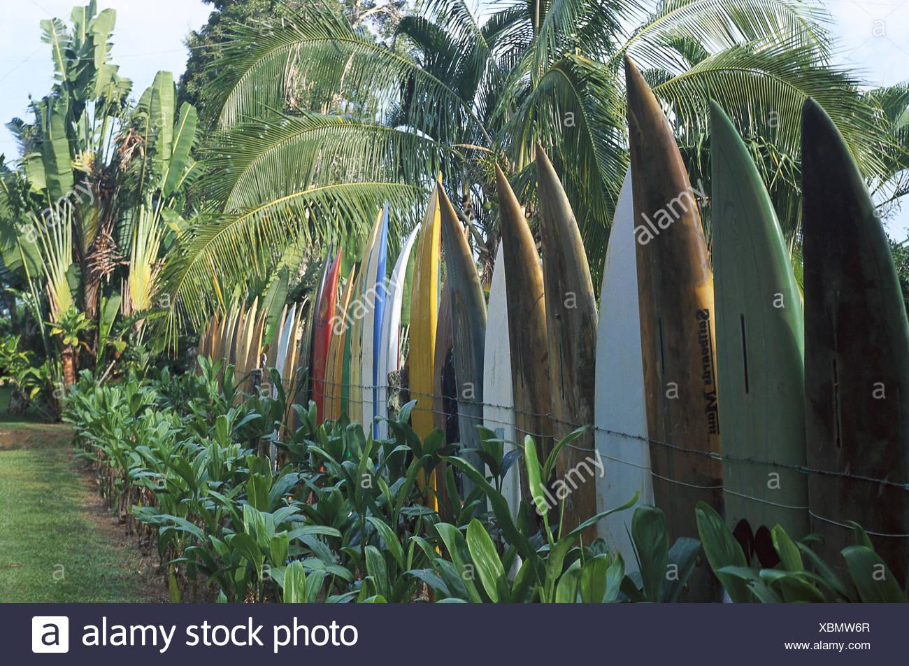 The Usa Hawaii Island Maui Fence Surfboards Palms The United