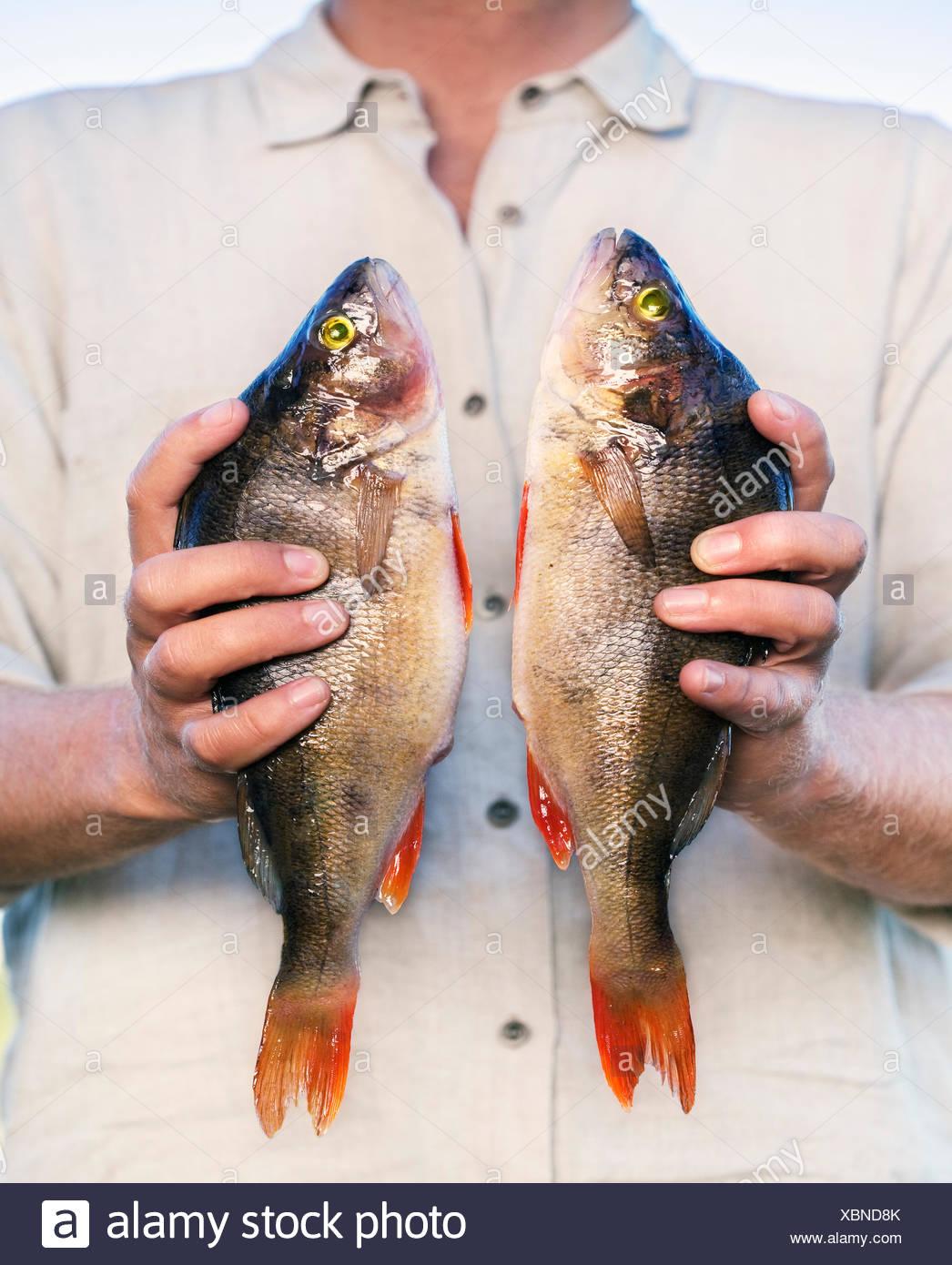 Man holding pair of fresh fish - Stock Image