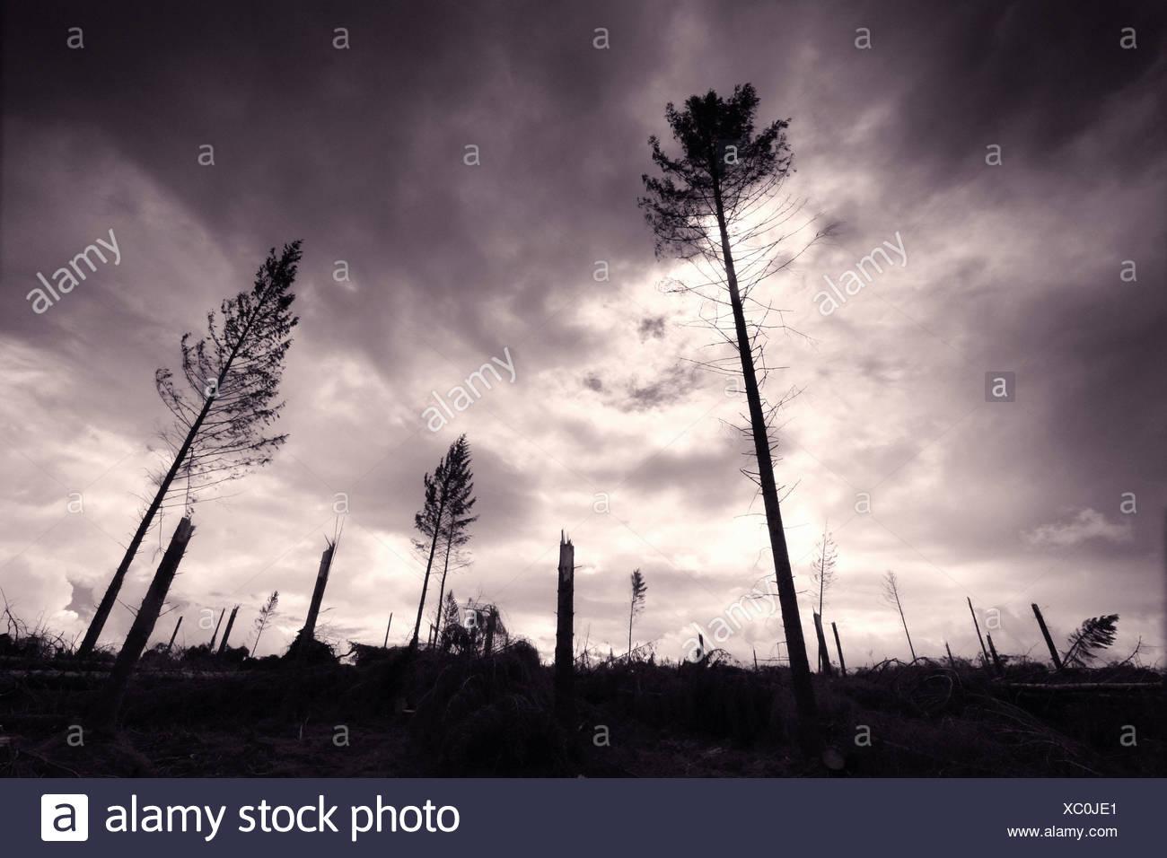 logging - Stock Image