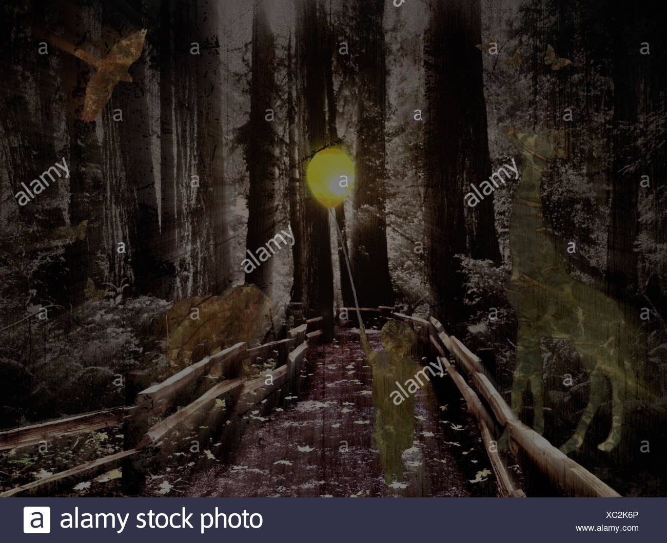 USA, California, San Francisco, Abstract of boy (4-5) walking on path in forest - Stock Image