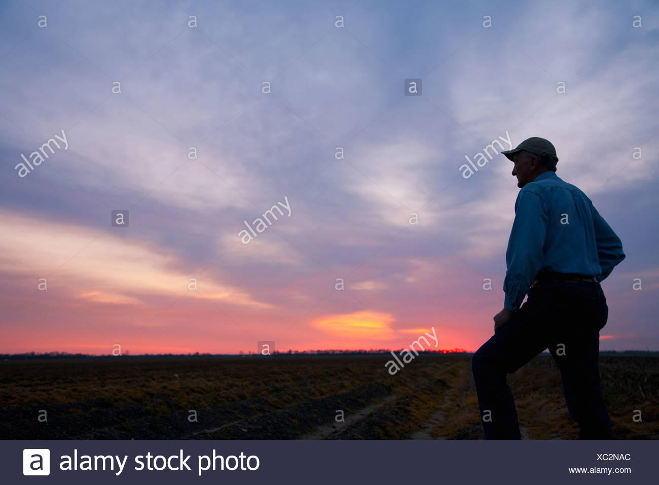 Agriculture - A farmer (grower) looks out across his field at sunrise / Eastern Arkansas, USA. - Stock Image