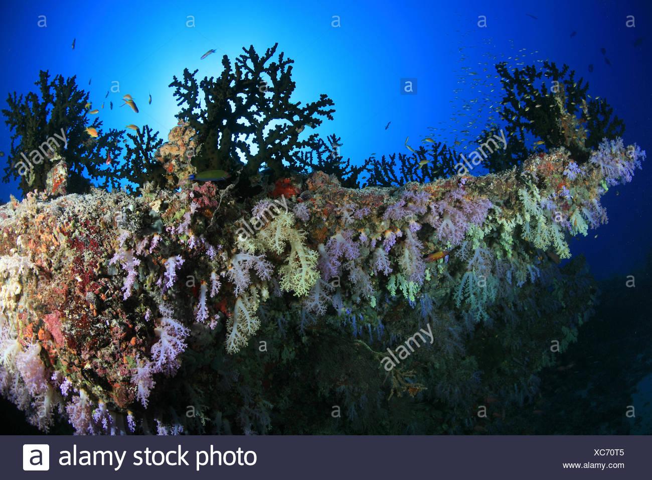 Nett Korallenriff Färbung Ideen - Malvorlagen Von Tieren - ngadi.info